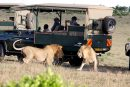 Conservation in the Masai Mara