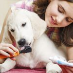 Some Useful Tips For Good Dog Care