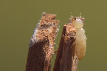 What Are The Benefits Of Termite Control Singapore?
